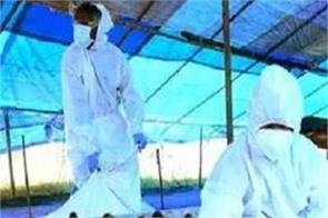 jalandhar bird flu epidemic humans