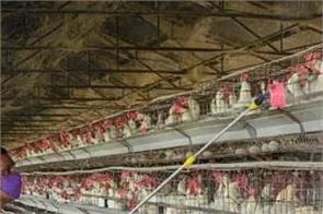 delhi ghazipur market bird flu sample negative