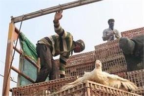 maharashtra bird flu 2 thousand birds death