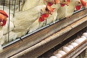 chicken and eggs demand fell by 60 per cent poultry stocks fell