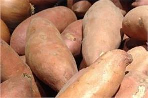sweet potato  imiuniti  blood pressure  diabetes  eyes