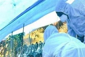 bird flu jammu kashmir alert