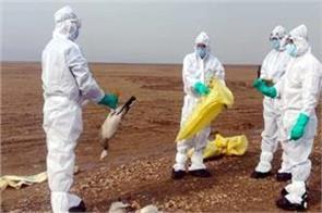 bird flu hits himachal after rajasthan