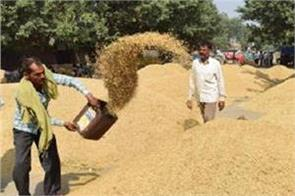 government bought 531 lakh tonnes of paddy at msp rate amid farmer protest