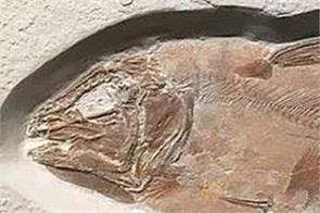 british scientist 60 million year old fish