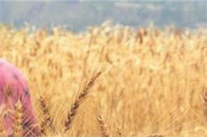 agriculture laws khattar government rabi crop farmers