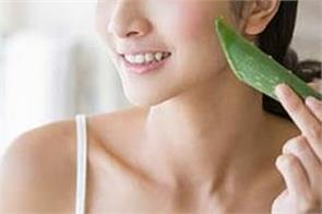 beauty tips aloe vera is useful for beautifying the face