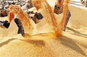 punjab 512063 metric tonnes of wheat was procured