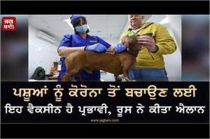 vaccine is effective in protecting animals from corona  russia has announced