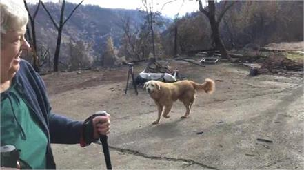 dog survived california wildfire guarded home