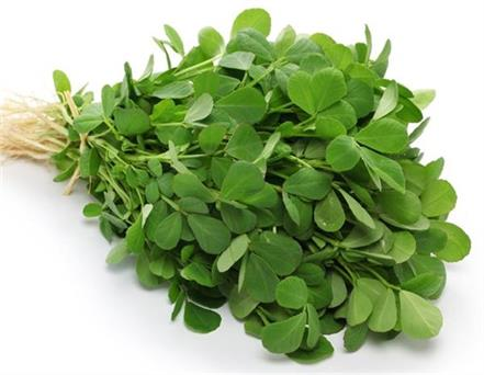 green fenugreek winter benefits