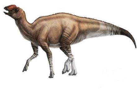 america  dinosaur