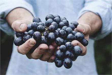 black grapes benefits
