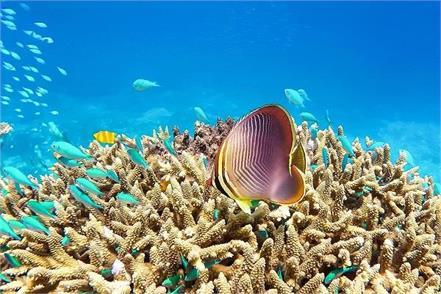 australia corals