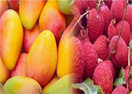 postmen will deliver mangoes and litchi to homes