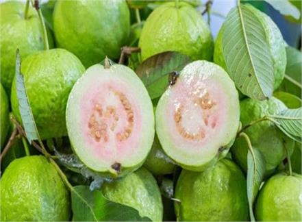 guava benefits nutrients body healthy