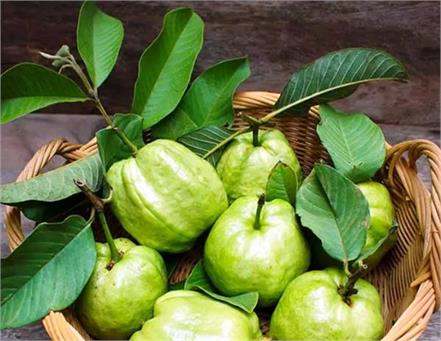 guava leaves weight loss sugar hair