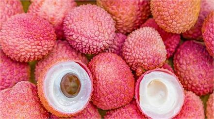 litchi weight water diabetes cancer immunity