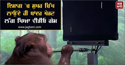 the monkey started playing video games as soon got super chip in his brain