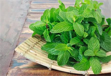 peppermint will also get rid of mouth odor hands and feet