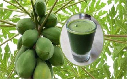 rain  weather  beneficial  papaya  leaves  juice