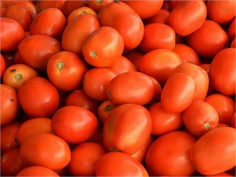 estimates of tomato price reduction after diwali