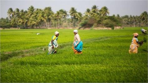 modi considering paying farmers cash instead of subsidies