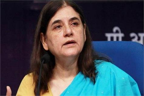 maneka gandhi s pause on discussions of contesting from karnal seat