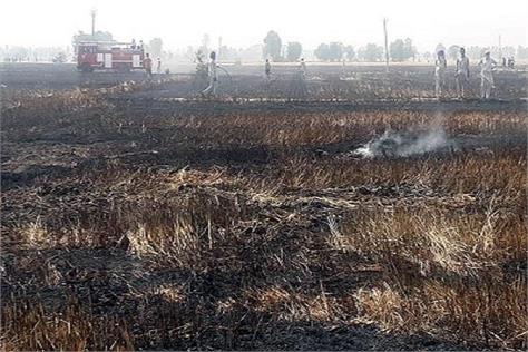 bhawanigarh wheat crop fire