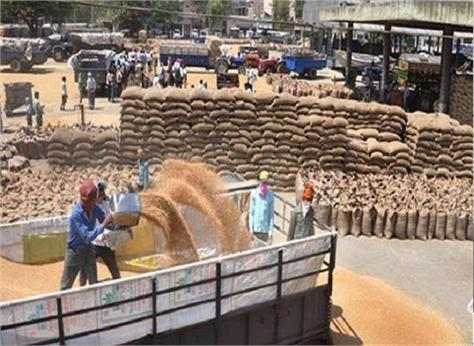 government likely to raise wheat import duty