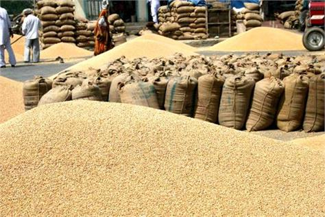 paddy crop  grain market