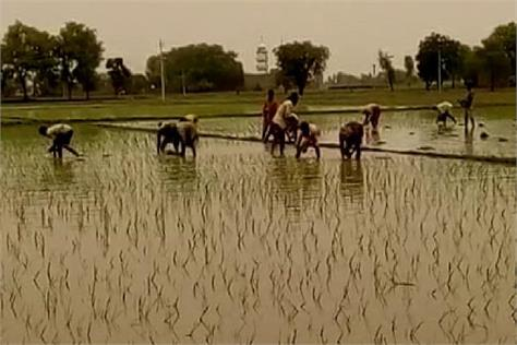 bathinda rain farmer happy