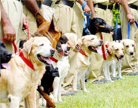 amritsar  customs department  sanyar dog