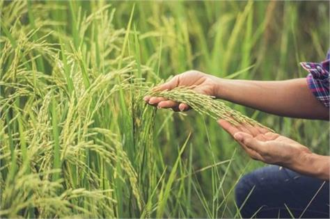 punjab chief secretary reviews preparations for paddy procurement