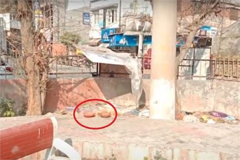 dogs killed in amritsar