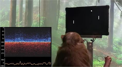 neuralinks brain computer interface demo shows a monkey playing pong